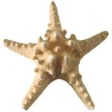 09084 Морска звезда 7 - 8 инча