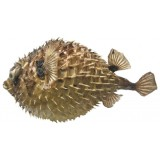 09092 Бодлива риба 39 см