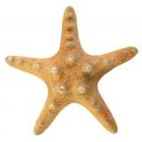 09096 Морска звезда 8 см