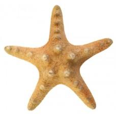 09097 Морска звезда 11 см
