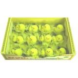14068 Пиленца в кутия 12бр 5см